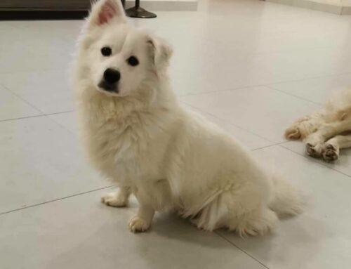 Dog: Carlton